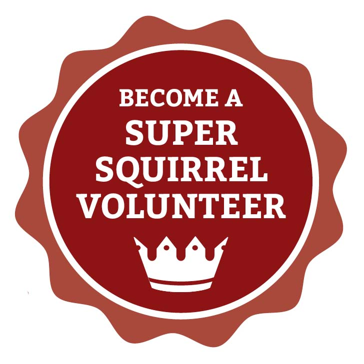 'become a super squirrel volunteer' badge graphic