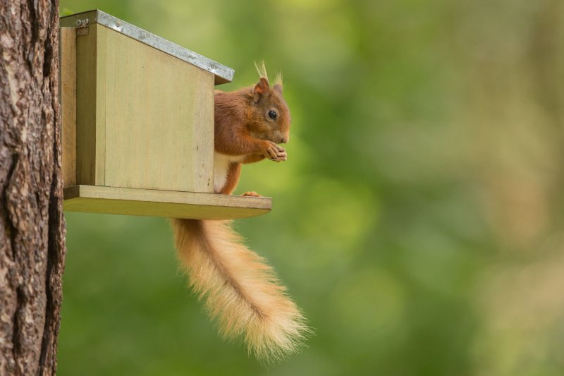 Squirrel at feederbox
