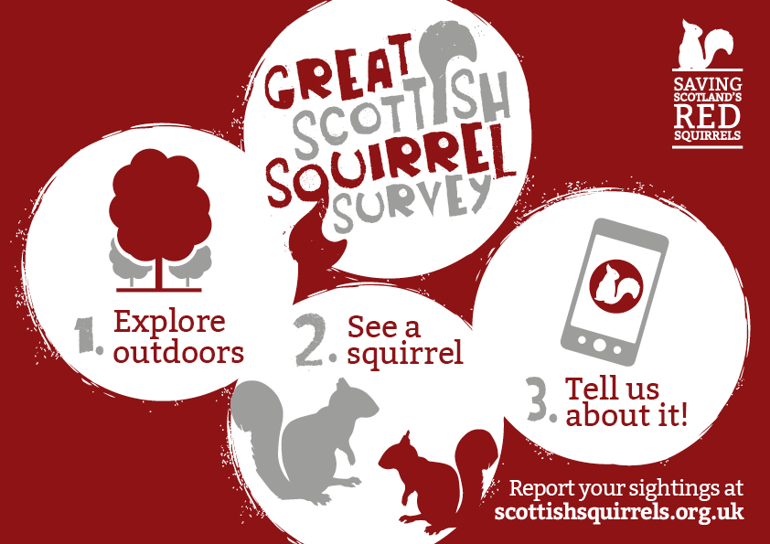 Infographic showing 3 steps to taking part - go outdoors, see a squirrel, tell us about it