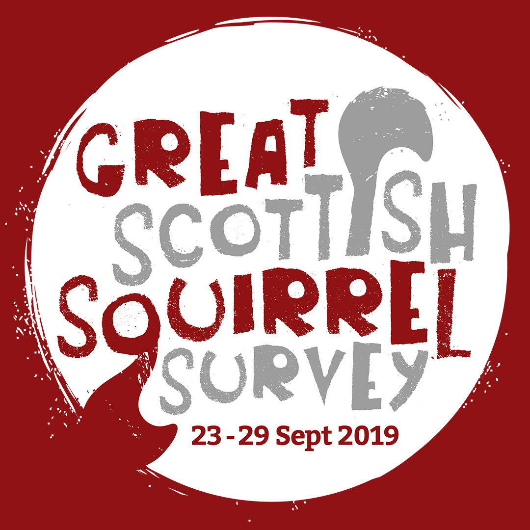 News: Almost 1000 squirrel sightings reported in one week during national survey