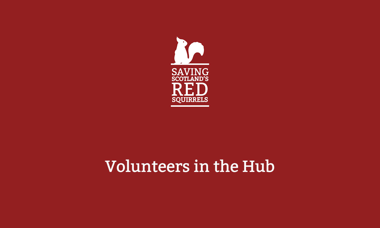 Volunteering and the Community Hub