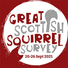 News: The Great Scottish Squirrel Survey returns in an important year for squirrel sightings